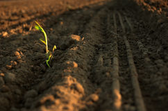 wiosna roślin obrazy royalty free
