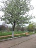 Wiosna robi everything piękny Zdjęcia Stock