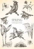 Wiosna rocznika kolekcja, ptaki i kwiaty, Obrazy Stock