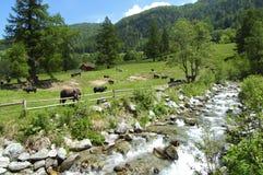 wiosna rolnej mountain Obrazy Stock