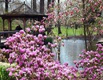 wiosna romansowa zdjęcie royalty free