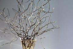 Wiosna rozgałęzia się w wazie Zdjęcia Royalty Free