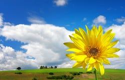 wiosna słonecznika czas Obrazy Royalty Free