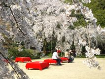 Wiosna Sakura w Kyoto, Japonia zdjęcia stock