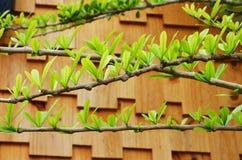 Wiosna sezon w Thailand Zdjęcie Stock