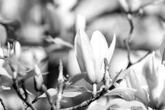 Wiosna sezonu pojęcie obraz stock