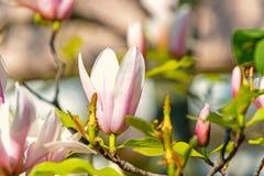 Wiosna sezonu pojęcie obrazy stock