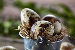 Wiosna skład przepiórek jajka w wiadrze i boxwood rozgałęziamy się na drewnianym tle, selekcyjna ostrość Zdjęcia Royalty Free