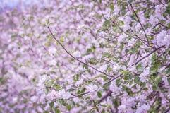 wiosna skakać Zdjęcia Royalty Free