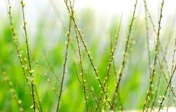 wiosna smak Zdjęcie Royalty Free