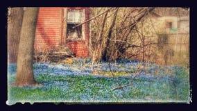 Wiosna spaceru niespodzianka Zdjęcie Royalty Free