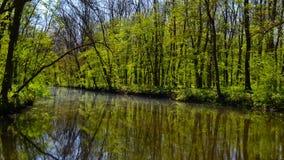 Wiosna staw Zdjęcia Stock