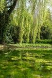 Wiosna staw fotografia stock