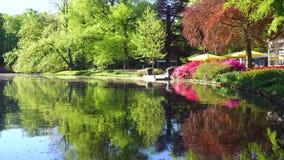 Wiosna staw w parku zdjęcie wideo