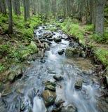Wiosna strumień w Carpathians. zdjęcie stock