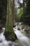 Wiosna strumienia przepływ w Yosemite Dolinie zdjęcie royalty free
