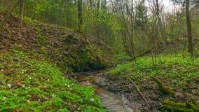 Wiosna strumyk, upływ z żurawiem zdjęcie wideo