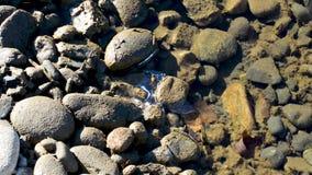 Wiosna strumyki płyną po roztapiającego śniegu woda są mętni