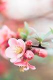 Wiosna szczegół Fotografia Royalty Free