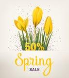 Wiosna sztandar z krokusem Zdjęcie Stock