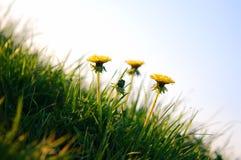 wiosna tło Zdjęcia Royalty Free
