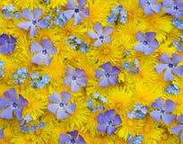 wiosna tło Fotografia Stock
