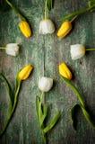 Wiosna tulipanów kwiaty zamknięci up na zielony drewnianym Fotografia Stock