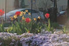 Wiosna tulipanów Waszyngton d C Obrazy Stock