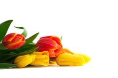 Wiosna tulipan Kwitnie nad bielem Tulipan wiązka Kwiecisty granicy Des zdjęcie royalty free