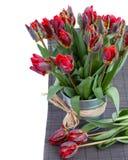 Wiosna tulipanu papuzi kwiaty obraz royalty free