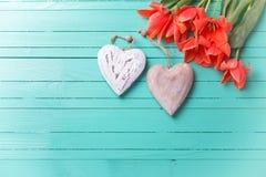 Wiosna tulipany i dwa dekoracyjnego serca na cyraneczce malowali woode Fotografia Royalty Free