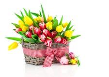 Wiosna tulipany w drewnianym koszu Obraz Royalty Free