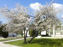 Wiosna w świętych Constantine i Helen kurorcie Obrazy Stock