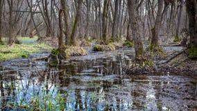 Wiosna w głębokim lesie Obrazy Royalty Free