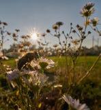 Wiosna w jesieni Obrazy Royalty Free