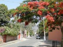 Wiosna w Jeziornym Chapala, Meksyk Obrazy Royalty Free