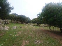 Wiosna w Jordania Fotografia Royalty Free