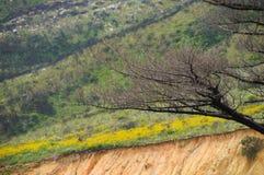 Wiosna w Kapsztad, Południowa Afryka Zdjęcie Stock