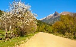 Wiosna w Kaukaz Zdjęcia Stock