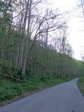 Wiosna w Kentucky zdjęcia stock