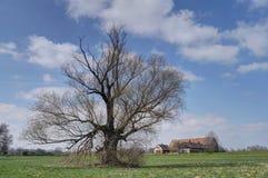 Wiosna w kraju Zdjęcie Royalty Free