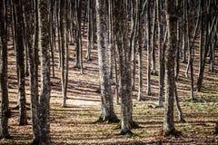 Wiosna w Krymskich górach obraz royalty free