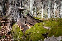 Wiosna w Krymskich górach fotografia stock