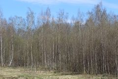 Wiosna w lesie Zdjęcia Royalty Free