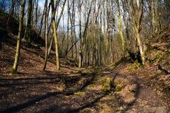 Wiosna w lesie Obrazy Stock