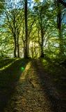 Wiosna w lesie Zdjęcie Royalty Free