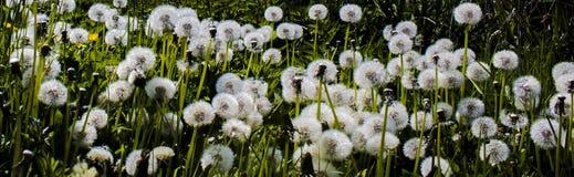 Wiosna w lesie Obraz Royalty Free