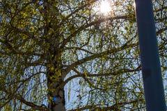 Wiosna w mój miasteczku Obraz Stock
