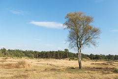 Wiosna w natura krajobrazie Obrazy Royalty Free