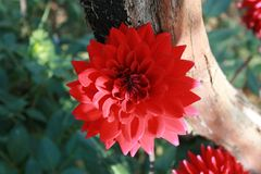 Wiosna w ogródzie Zdjęcie Stock